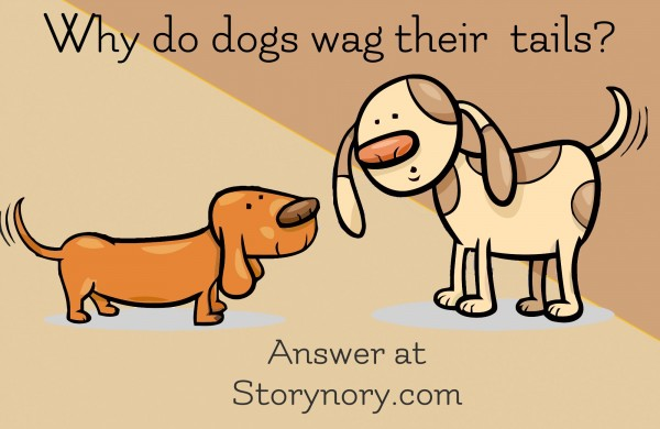 why dogs wag tales