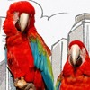 two parrots in city