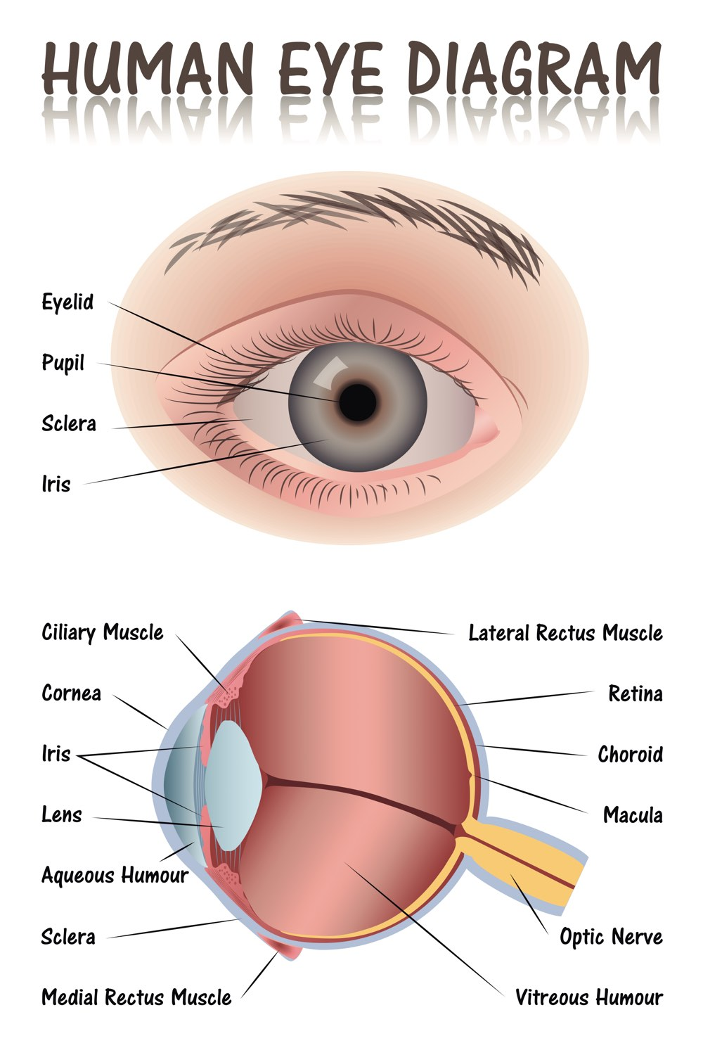 Eye-diagram-opt