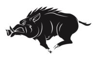 The Wild Boar that came for Croesus