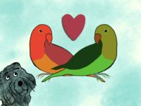 Two Parrots in Love with dog looking on from Storynory Astropup series
