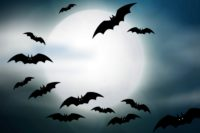 The moon with bats