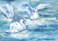 Watercolour Swans